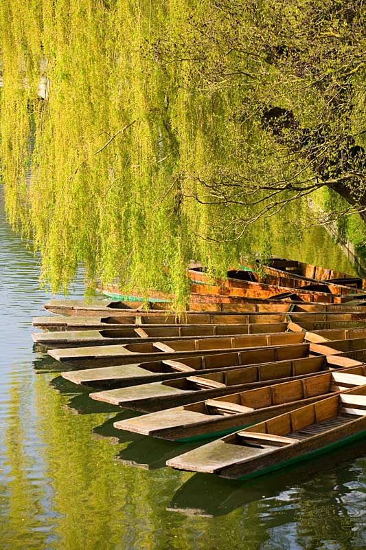 Trinity Punts on the River Cam